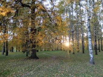 Закат в стволах деревьев